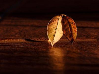 calming leaf image